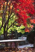 Leaf(가을낙엽)069
