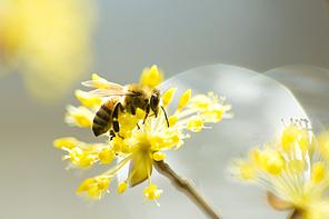 [PHO246] 봄의향기166