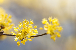 [PHO246] 봄의향기306