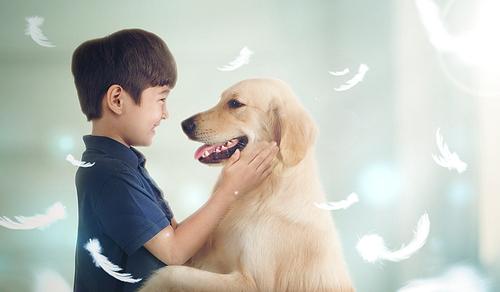 My Pet 011