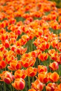 봄 090