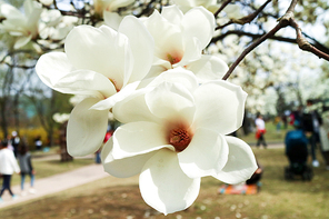 봄 153