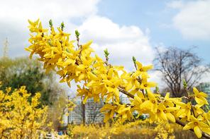 봄 154