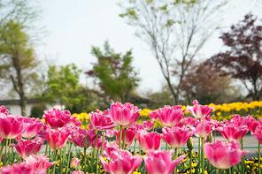 봄 169
