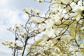 봄 173