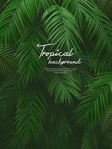Tropical Background 007