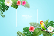 Tropical Background 008