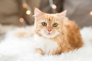 pets, christmas and hygge concept - red tabby cat on sofa with sheepskin at home in winter