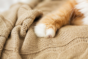 pets and hygge concept - close up of red cat paw on knitted blanket