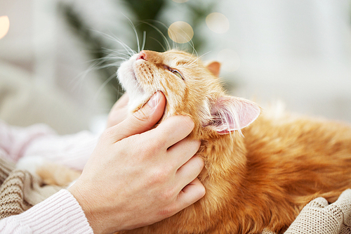 pets, hygge and people concept - close up of female owner with red tabby cat in bed at home