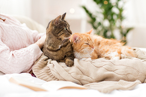 pets, hygge and people concept - close up of female owner with red and tabby cat in bed
