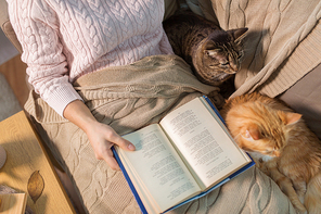 hygge, literature and people concept - close up of red and tabby cat and female owner reading book in bed at home