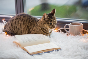 pets, christmas and hygge concept - tabby cat lying on window sill with book and garland lights at home