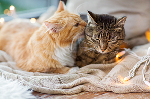 pets, christmas and hygge concept - two cats lying on window sill with blanket at home