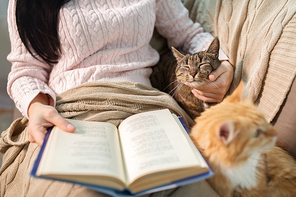 pets, hygge and people concept - close up of red and tabby cat and female owner reading book in bed at home