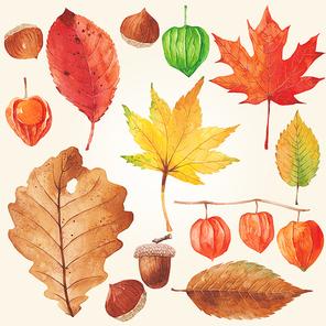 [일러스트] 가을 식물 수채화 04