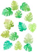 [일러스트] 여름 수채화 - 열대나뭇잎 01