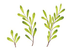 [일러스트] 녹색 나뭇잎 수채화