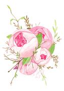 [일러스트] 장미꽃다발 수채화