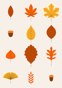 가을 나뭇잎 벡터 일러스트레이션 01