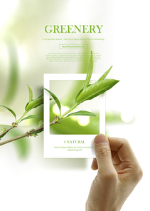 greenery_001