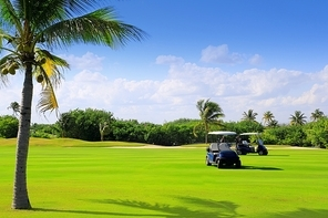 golf course tropical palm trees in mayan riviera Mexico