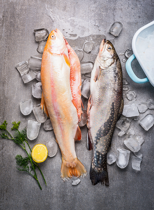 Raw whole trouts with ice cubes on concrete stone background. Seafood concept