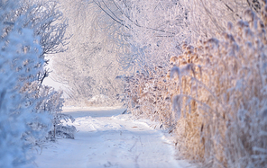 rural road covered with snow, frosted trees