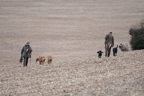 The picking up team walking to the next drive with thier dogs