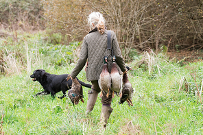 A woman picking-up duck with her working black labrador