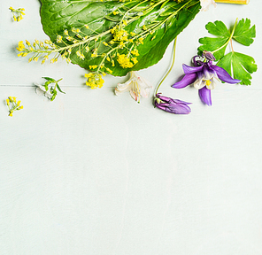 Spring or summer garden flowers with leaves on light green background, top view, place for text, border