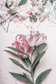 Pastel pink lilies flowers on desktop, top view