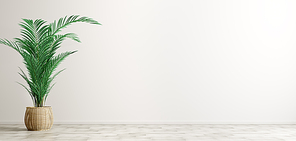 Empty room interior background, basket plant pot with palm over white wall 3d rendering