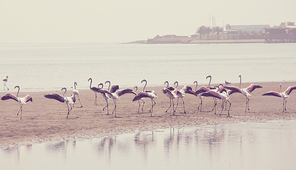 Flamingo in a beautiful mountains lake