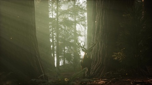 Beautiful deer in the forest with amazing lights at morning