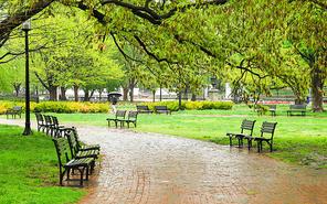 봄비내리는 공원 풍경