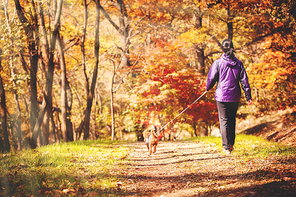아름다운 단풍이 든 가을의 숲 속 산길을 걷고 있는 여자와 강아지