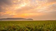 경주 시골 비 온뒤 붉게 물든 노을과 논밭 풍경