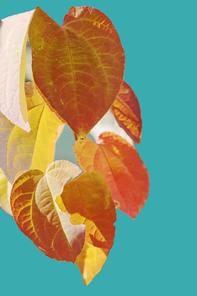 단풍잎 나무 단풍 가을