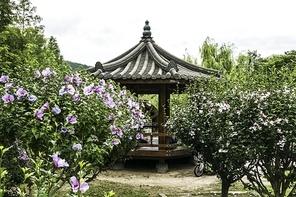 정자와 활짝 핀 아름다운 무궁화 꽃