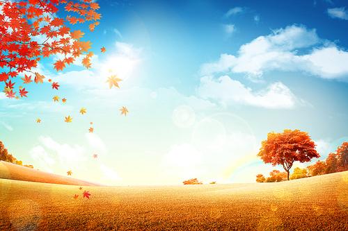 가을배경 008
