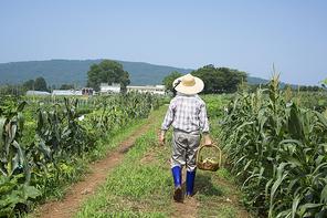 농부 126