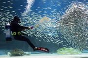 수중생물 022