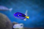 수중생물 033