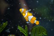 수중생물 045