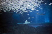 수중생물 049