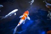 수중생물 081