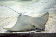 수중생물 134
