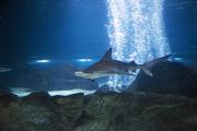수중생물 139