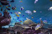 수중생물 143
